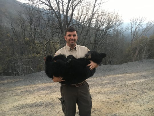 Environmental Program Manager Jeff Stoddard of the California Department of Fish and Wildlife holds the bear badly burned in the Carr Fire.
