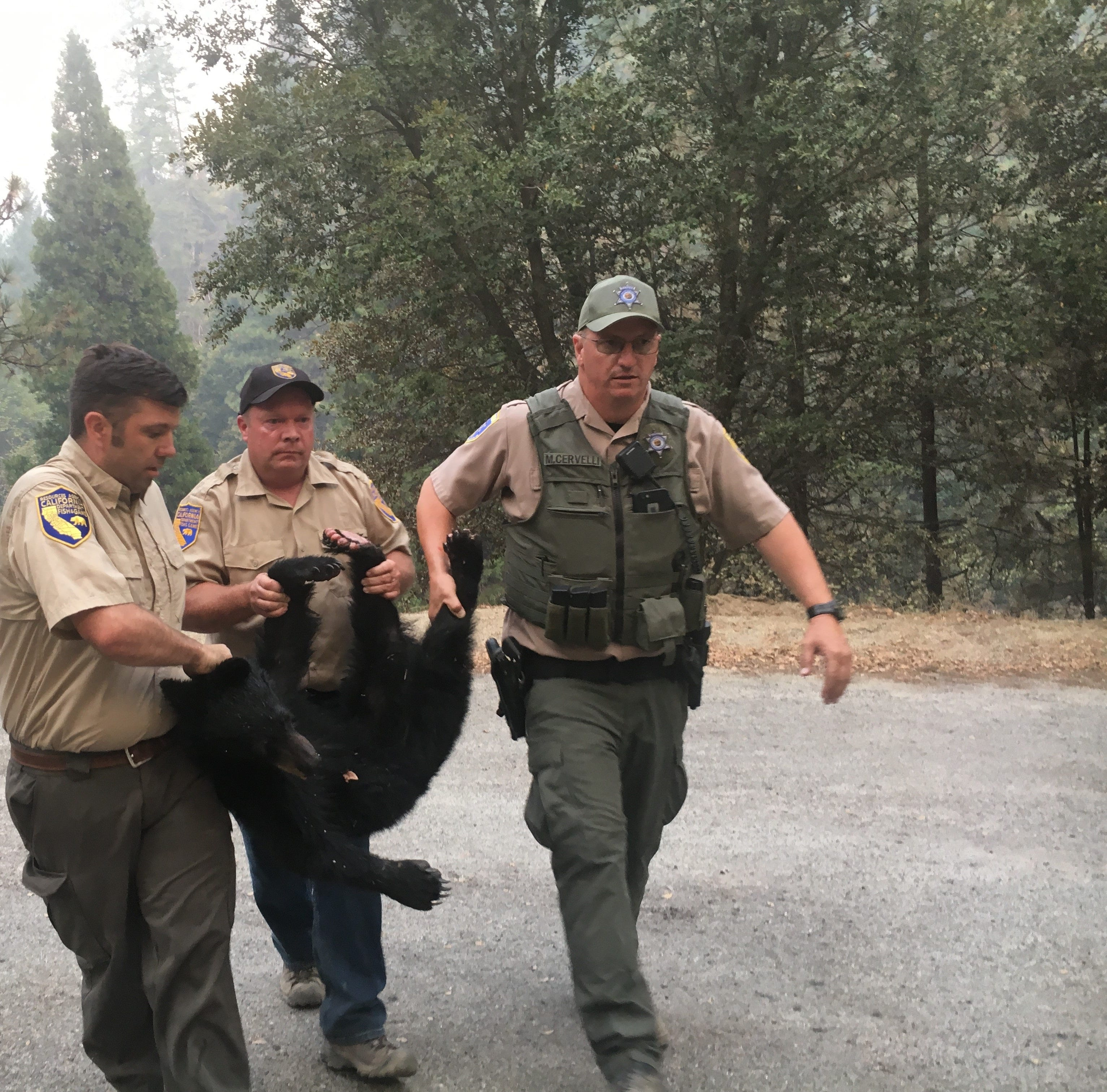 Images of the Carr Fire bear from Whiskeytown