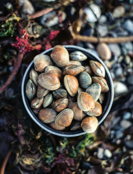 By The Shore By Nancy Blakey Clams Photography By Nick Hall