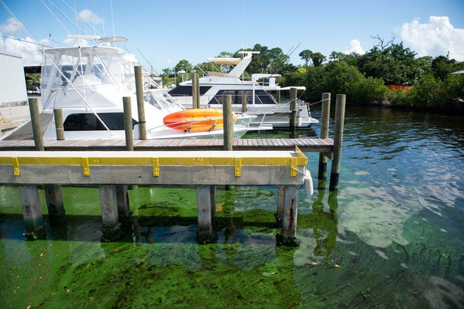 Bright-colored toxic blue-green algae swirls around the Central Marine boat basin on Monday, August 8, 2018, in Stuart. A sample taken by the Florida Department of Environmental Protection from Central Marine on Aug. 2 shows the toxin microcystin at a rate of 110 parts per billion. The World Health Organization considers levels about 10 parts per billion to be hazardous.