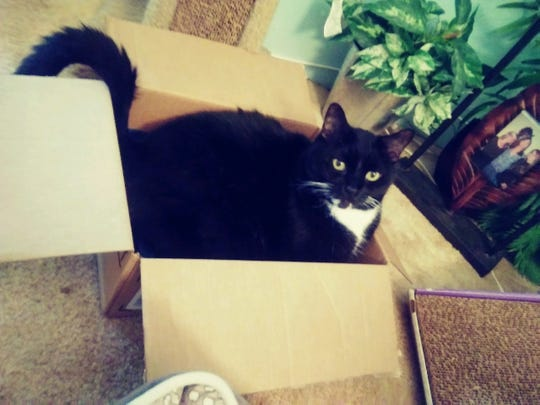 Timmy loves boxes.