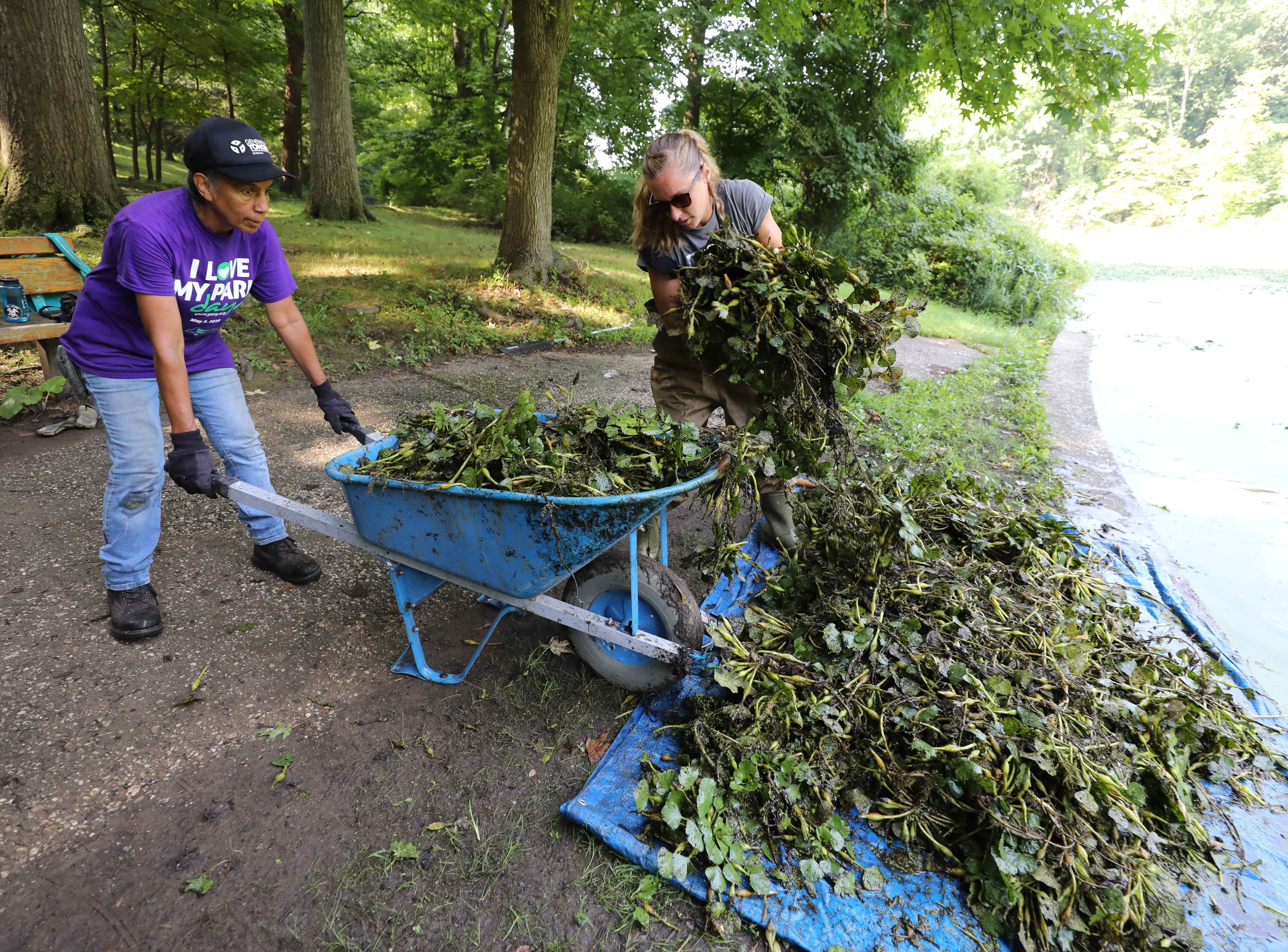Volunteer Norma Silva and Erin Cordiner, the volunteer coordinator with The Westchester Parks Foundation, load invasive water chestnut plants into a wheelbarrow at Tibbetts Brook Park in Yonkers, Aug. 8, 2018.