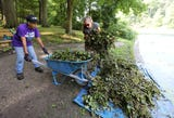 The Westchester Parks Foundation and other volunteers remove invasive water chestnut plants from the lake at Tibbetts Brook Park in Yonkers.