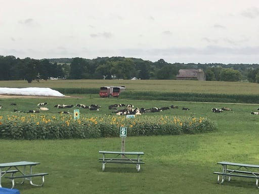Sunflowers take flight for veterans at Kelley's Country Creamery