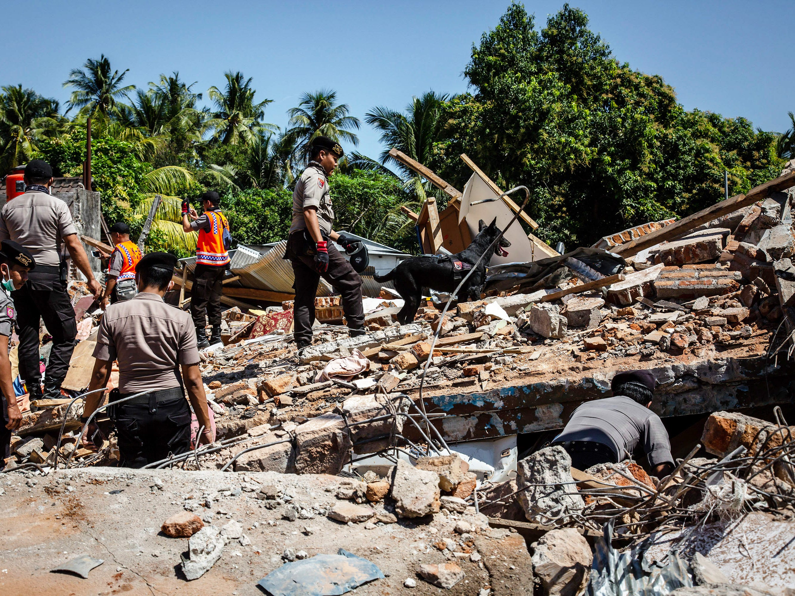 An Indonesian police with K-9 dog looking for victims at a collapsed house following an earthquake in Tanjung on Aug. 8, 2018 in Lombok Island, Indonesia.