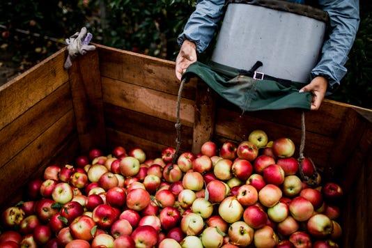 Orchard 100617 Ac 07