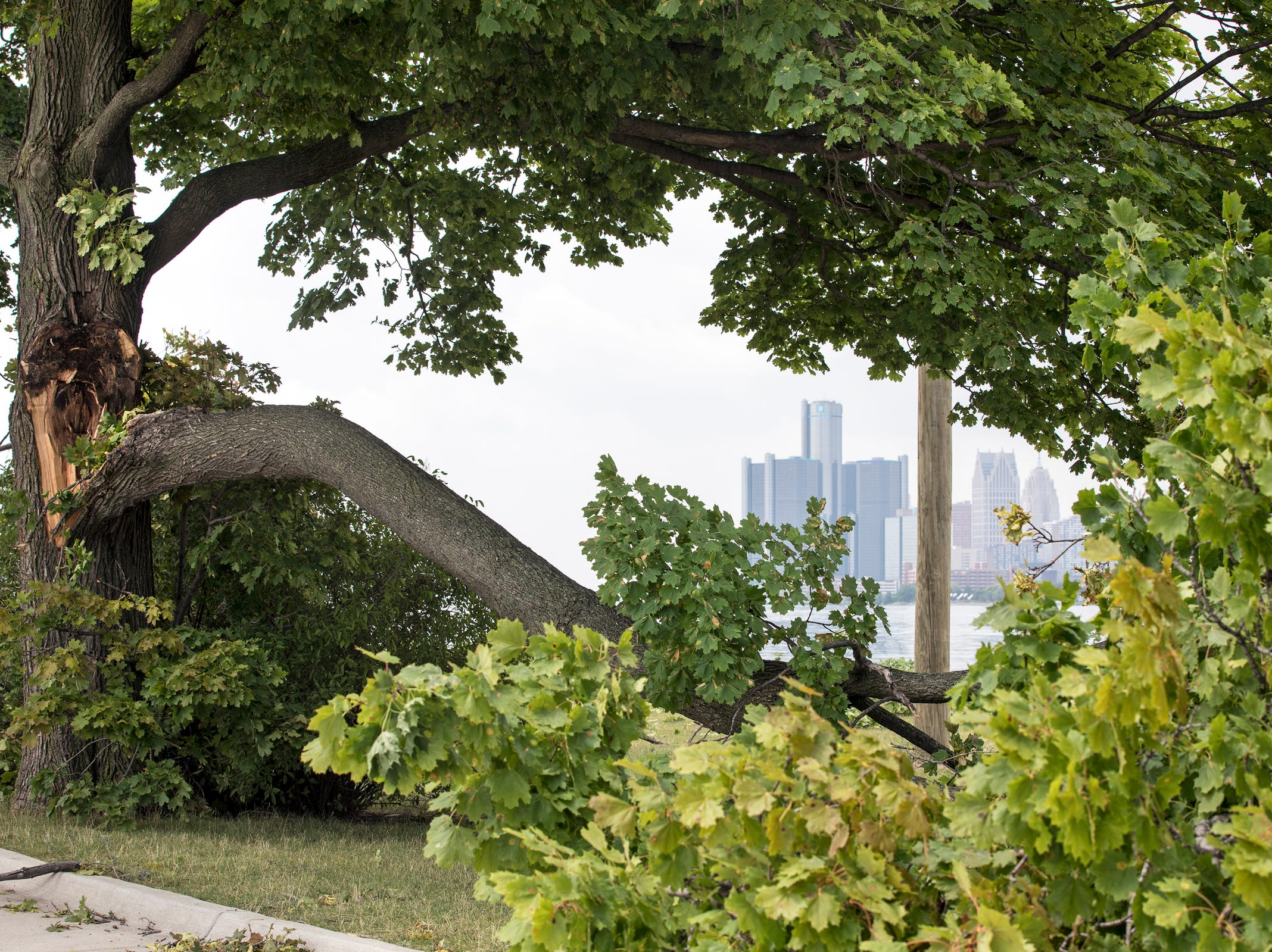 A damaged tree frames a city view on Belle Isle in Detroit, Mich., Tuesday, August 7, 2018.
