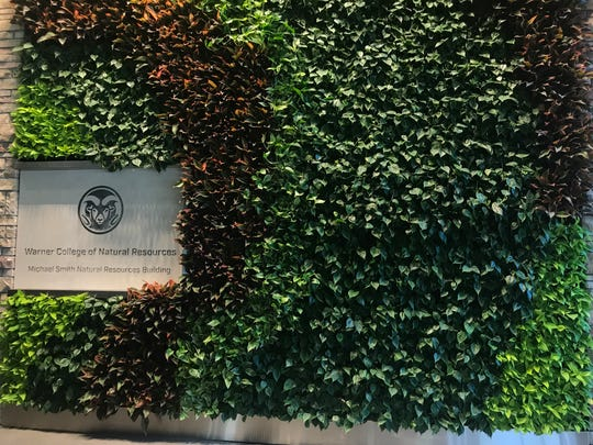 One of the additions to the Michael Smith Natural Resources building at Colorado State University include a living wall. The wall is inside the building. It speaks to the students' desire to be connected with their natural resources passion, said Rob Novak, spokesman for the college.