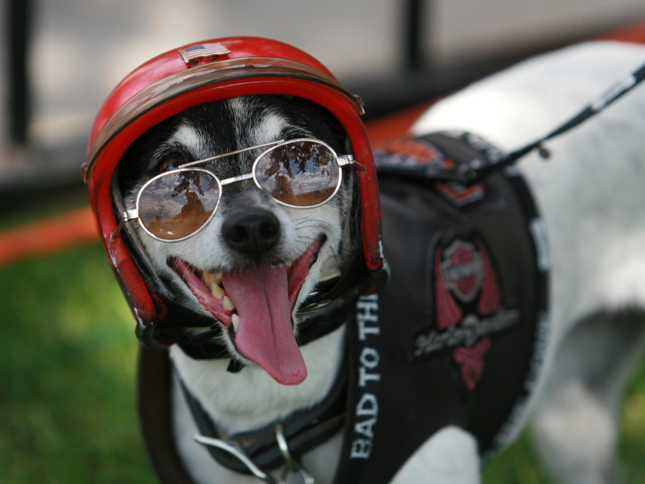 2012: Visitors bring families and pets to the annual bike week in Sturgis.