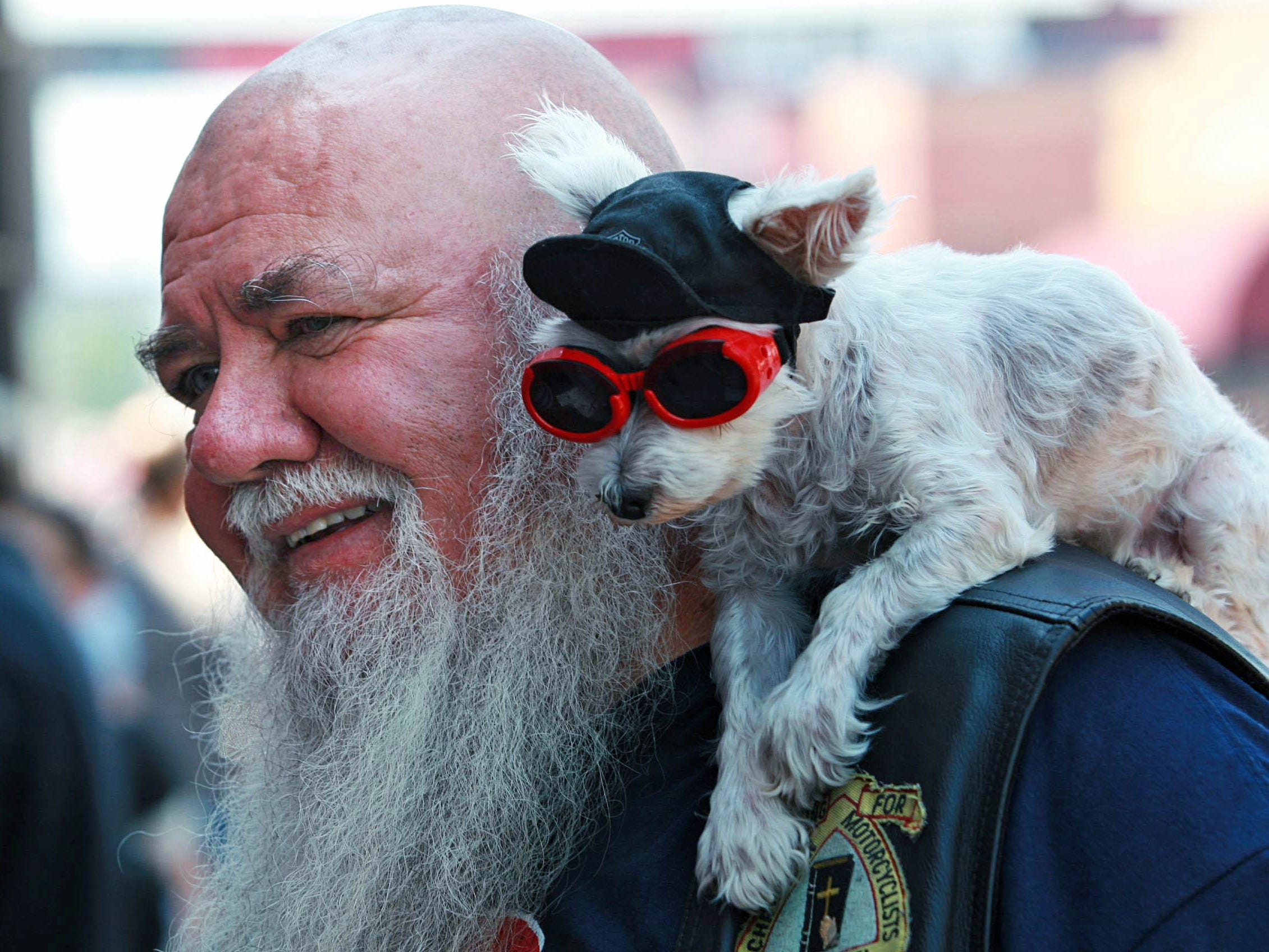 2012:  Jim Carson and his dog Booboo hang out on Lazelle Street in downtown Sturgis. Booboo was born during the rally 19 years ago. Carson, from Gillette, Wyoming, has been coming to the event for more than 40 years.