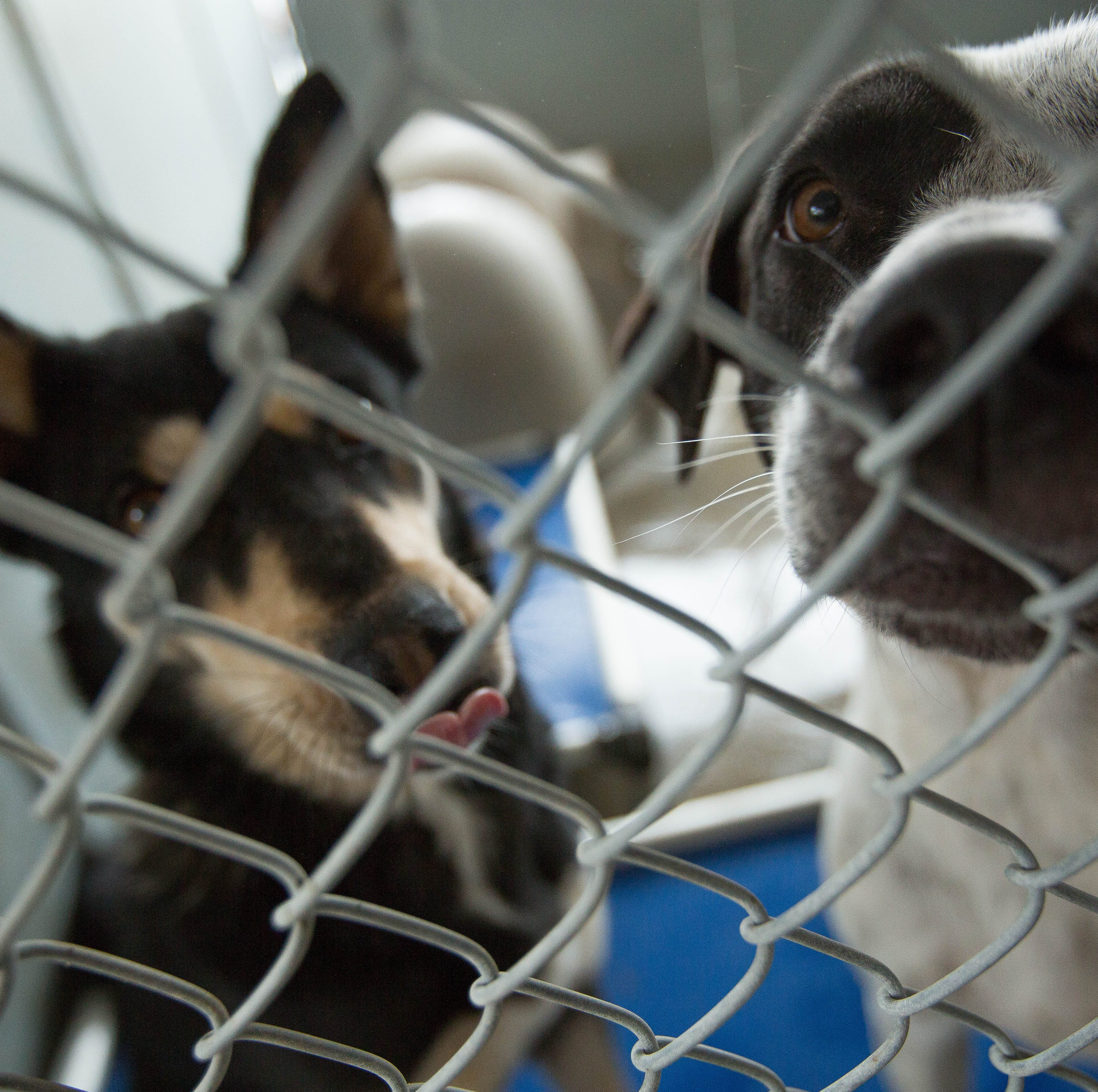 Las Cruces animal shelter trying to combat dog distemper outbreak