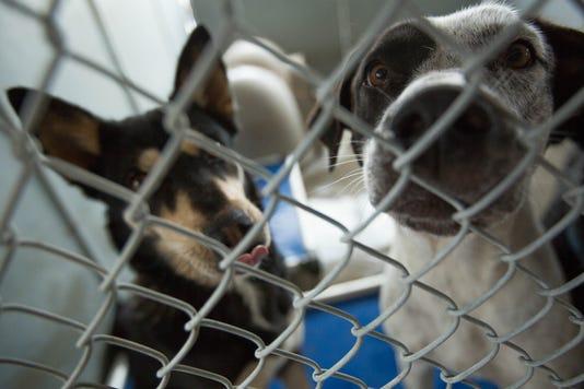 Las Cruces animal shelter distemper