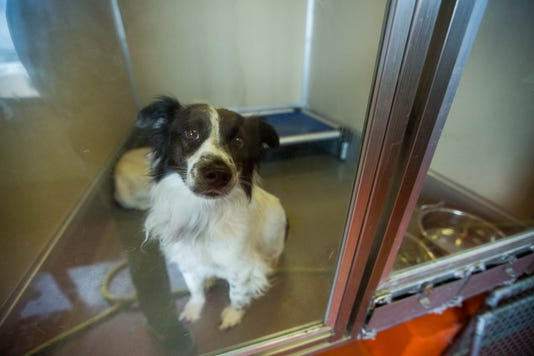 Las Cruces animal shelter distemper
