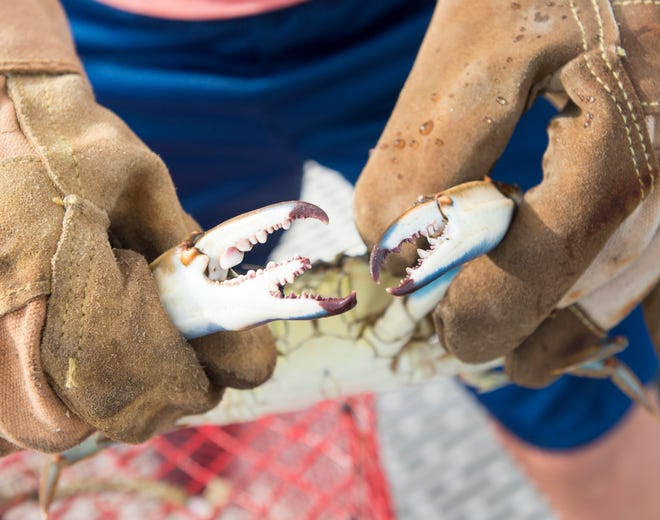 Ben Kalb, 12, shows off the three-clawed blue crab that he recently caught behind his home on Little Sabine Bay in Pensacola.   Thursday, August 9, 2018.