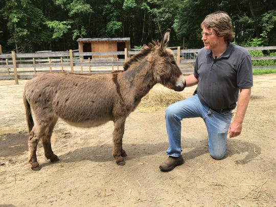 In this July 30 photo, Donkey Park owner Steve Stiert, interacts with one of his miniature donkeys at Donkey Park in Ulster Park.