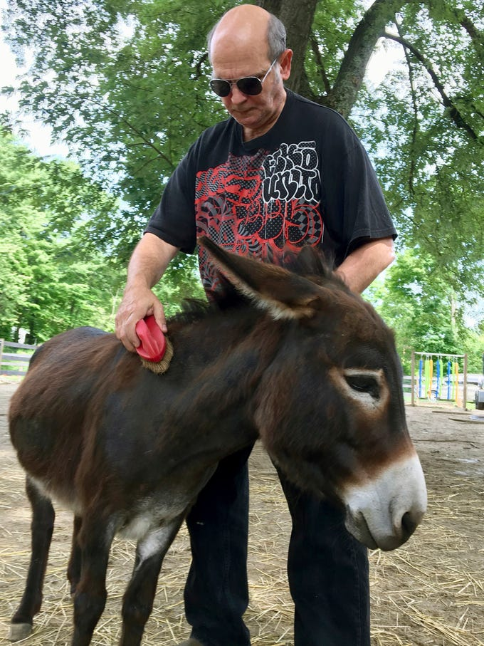 In this July 30 photo, Donkey Park visitor Tom Cossaboom brushes a miniature donkey at Donkey Park in Ulster Park.