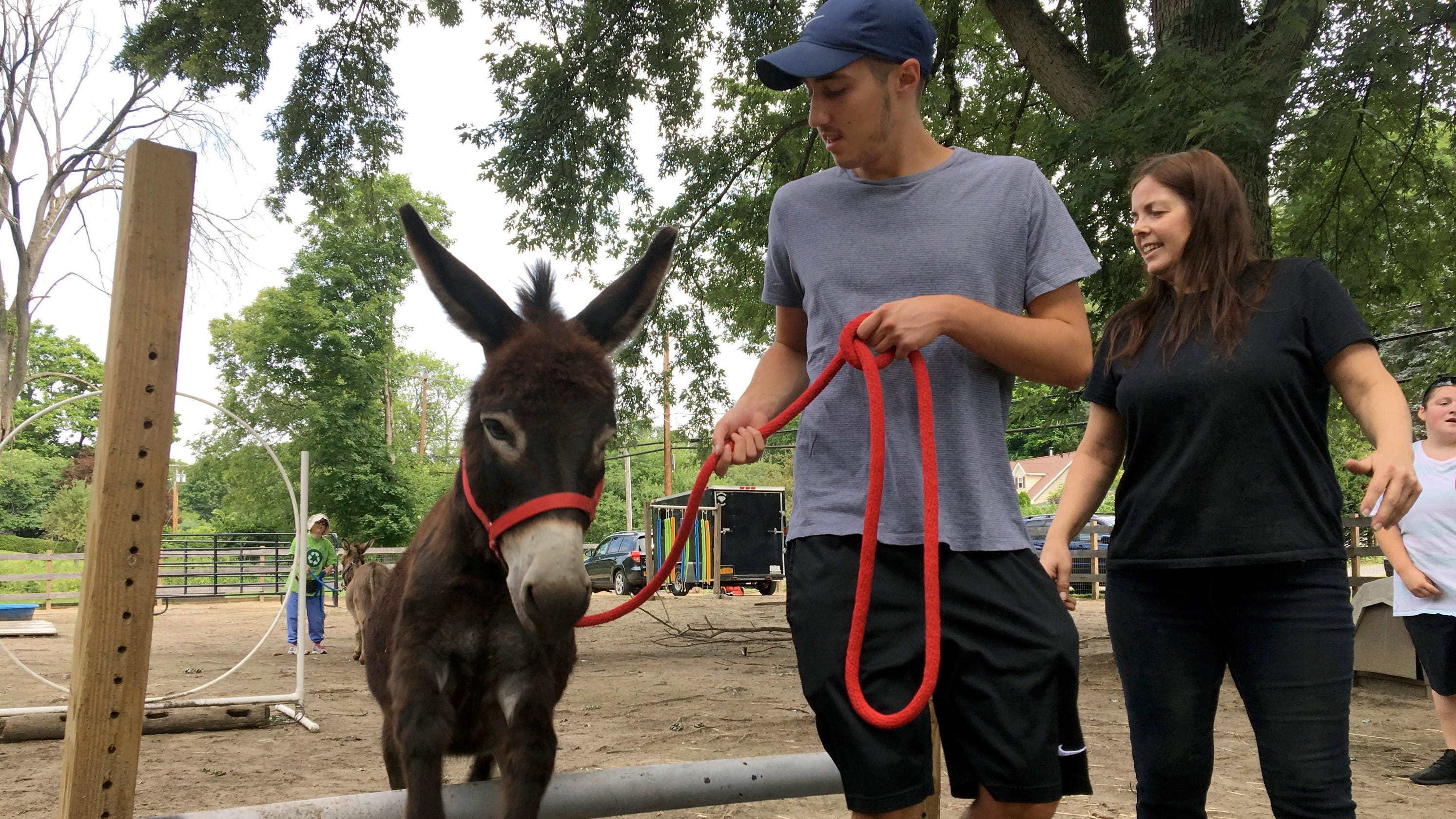 How an Ulster man turned donkeys into therapy