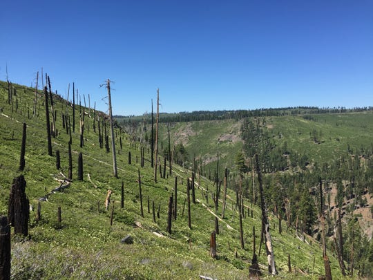 Deforested burn scar from the 2001 Blue Fire in the Warner Mountains of California.