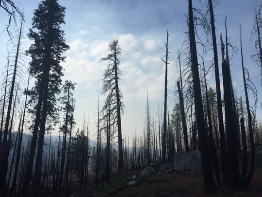 Forest damaged by the Grouse Fire in 2009 in Yosemite National Park.