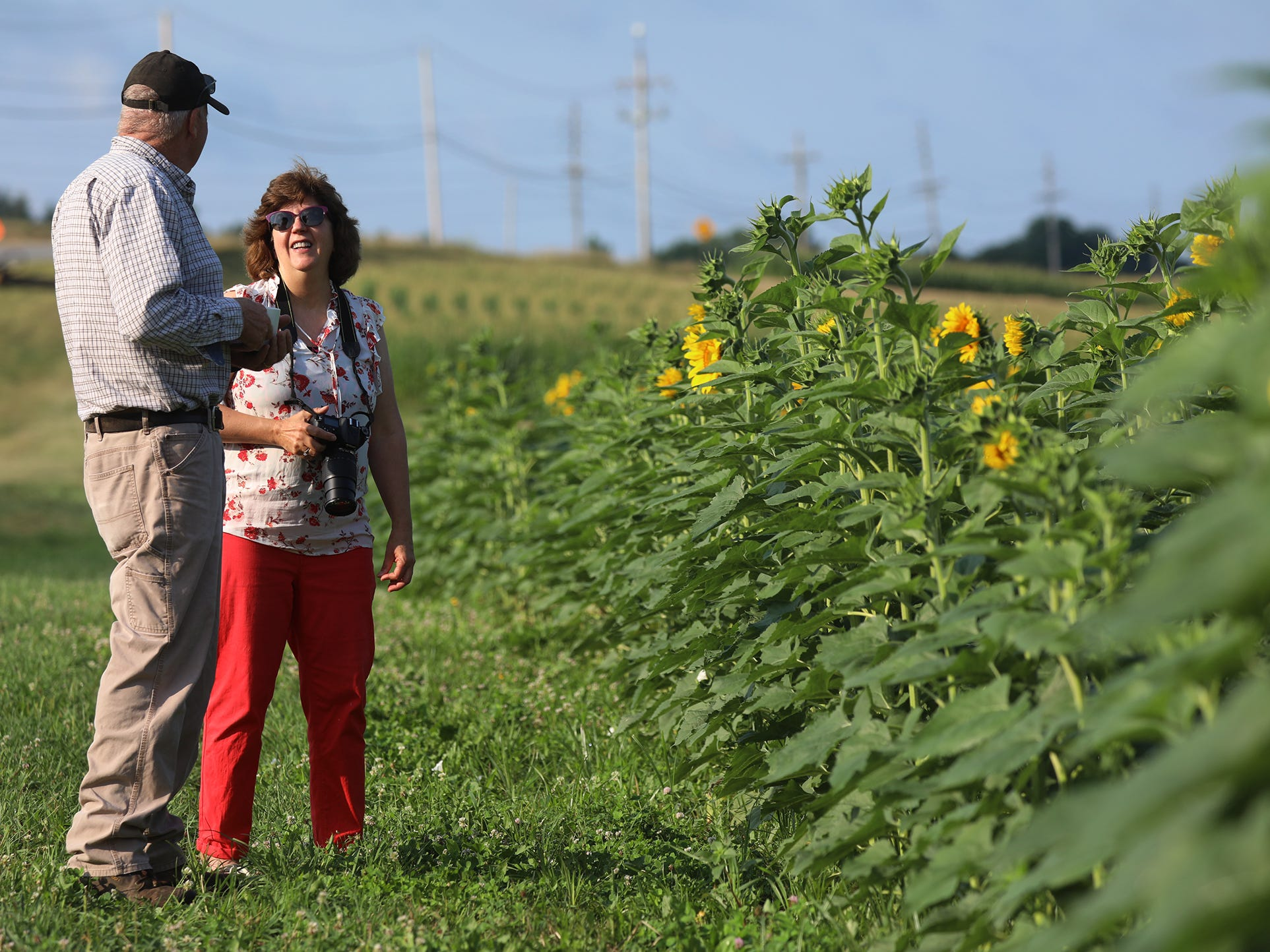 Mark Greene, owner of Hopkins Family Farm in Pittsford, talks with Claire Talbot of Henrietta.  They became friendly when she started photographing his barns and sunflowers years ago.  Every year she gives him a photo taken at his farm.