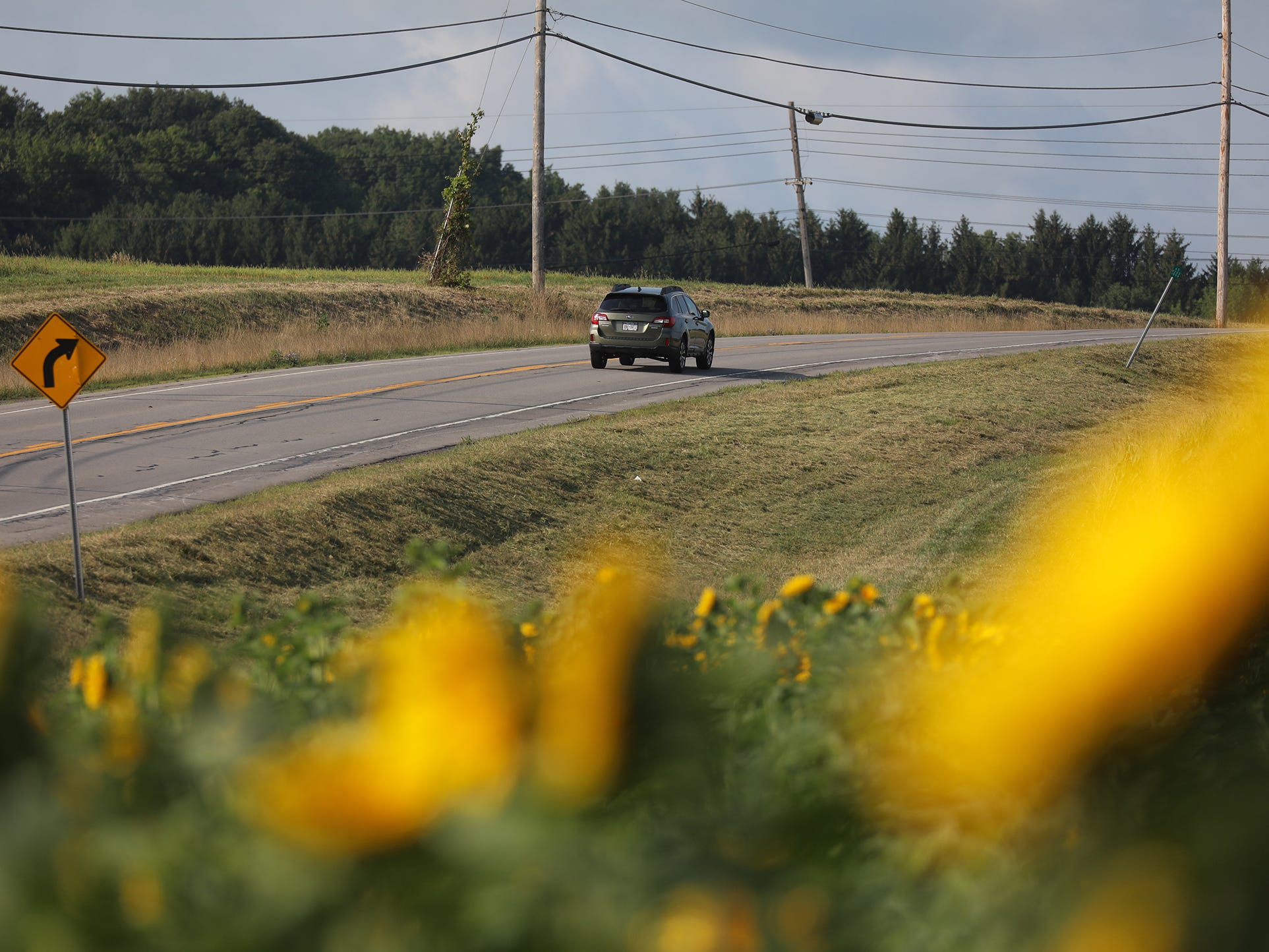 The sunflower crop is popular with area photographers.  The flowers are planted along a portion of Clover St. in Pittsford.
