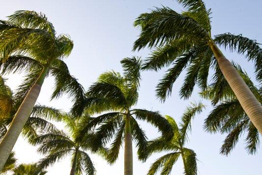 Lethal Bronzing Palms 080718