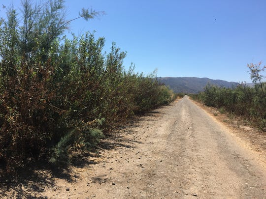 One of the old roads once buried under Lake Casitas that now carves a path through thick brush.