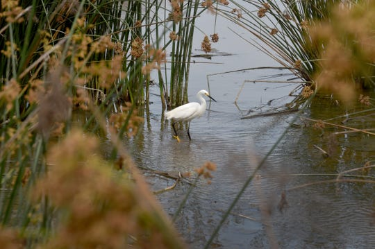 A bird stands in a canal in the Ormond Beach wetlands in Oxnard. The latest plan to restore Ormond Beach includes rerouting a lagoon, putting up a visitor center and installing a trail system with multiple trailheads.