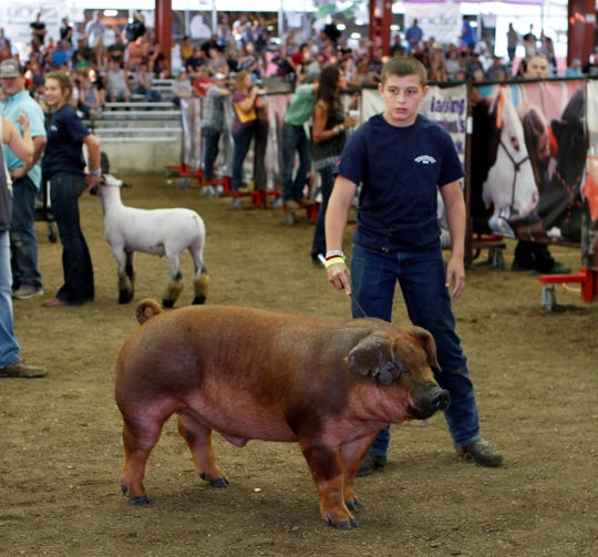 Ryan Schubert, 12, of Mineral Point, waits to walk his Champion Breed Barrow Duroc onto the stage for the Governor's Blue Ribbon Livestock Auction at the Wisconsin State Fair on Aug. 8.