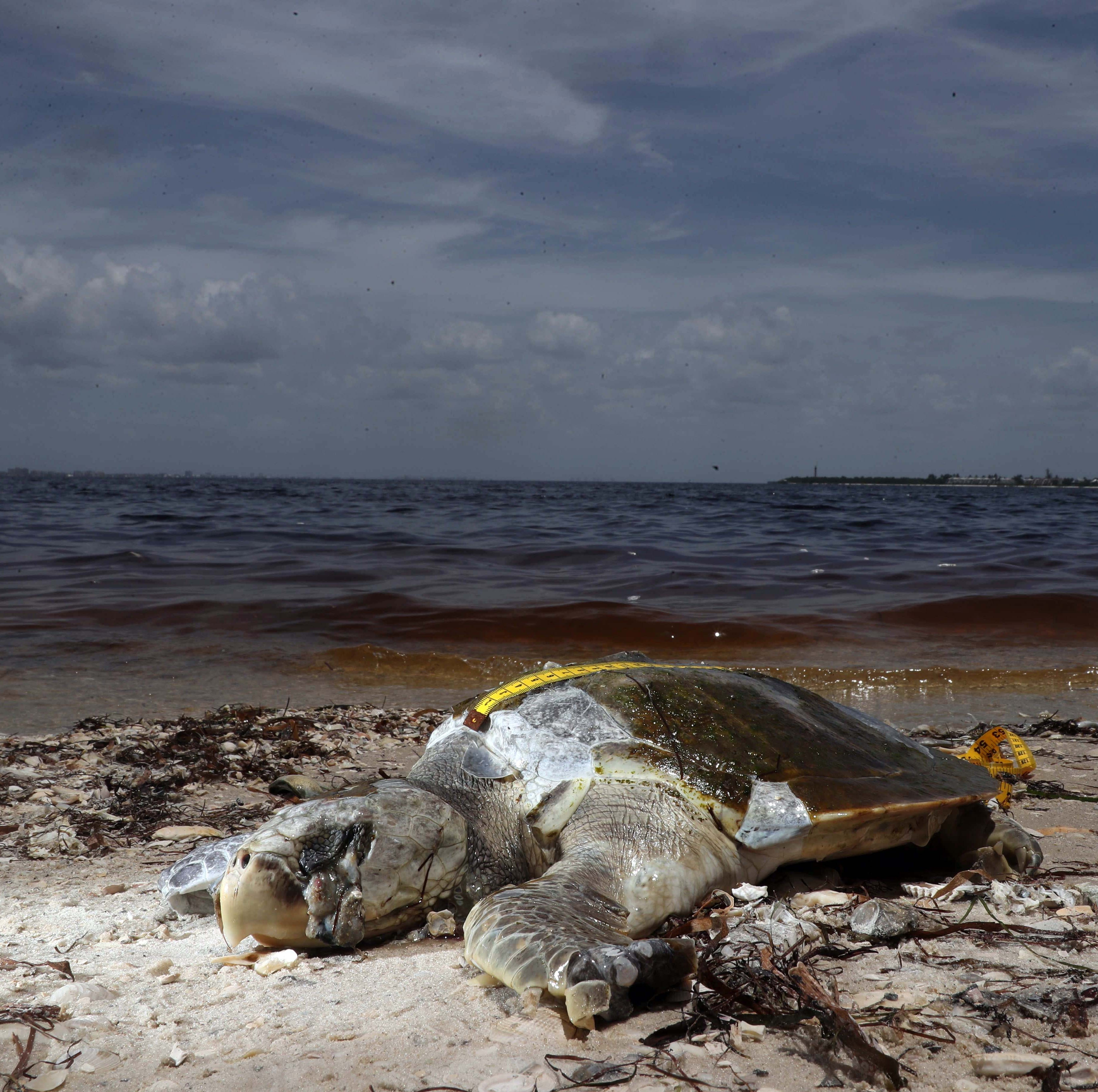 Red tide rising: Victims powerless when government fails | Opinion