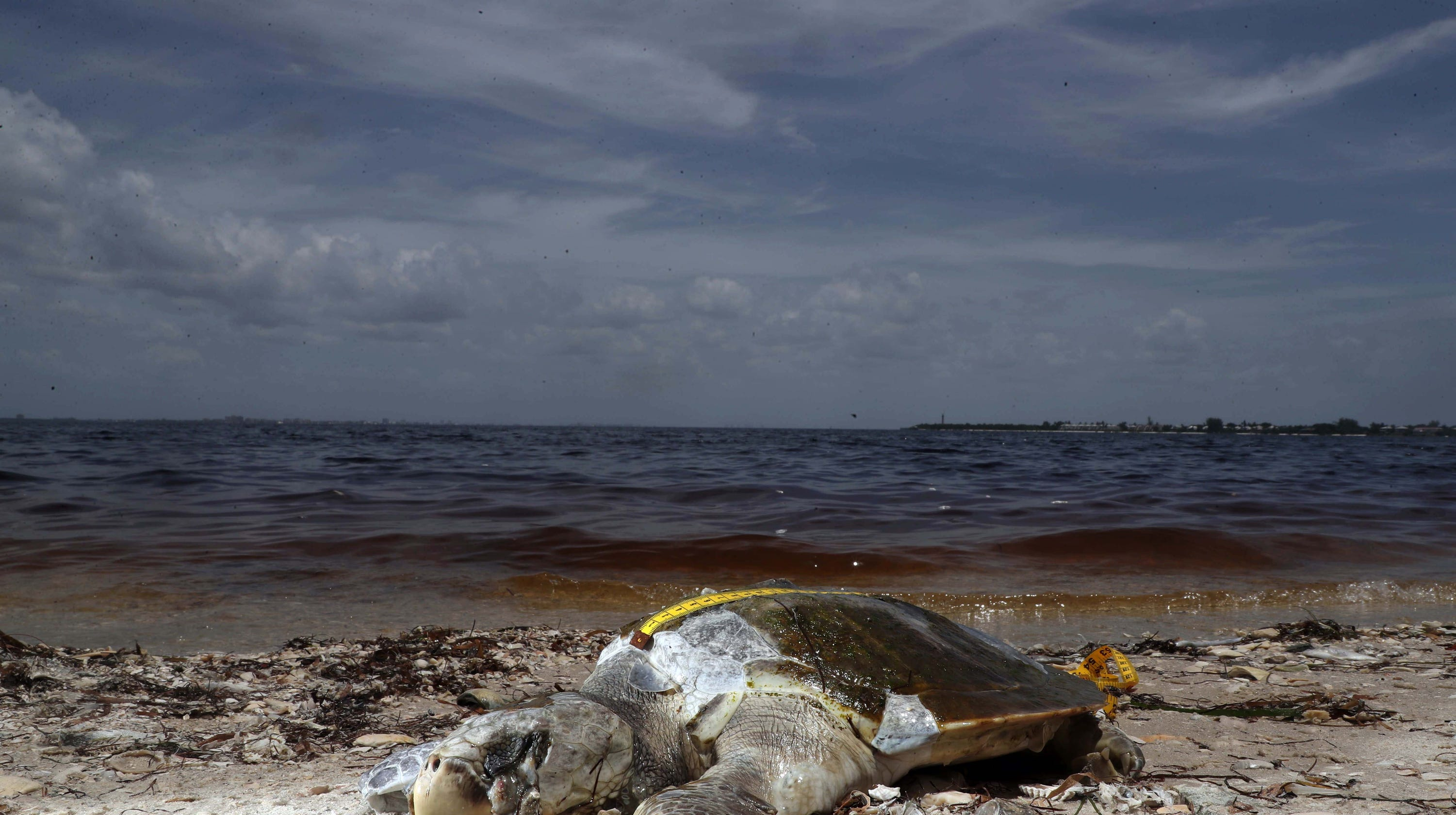 Should travelers visit Florida beaches during a red tide outbreak?