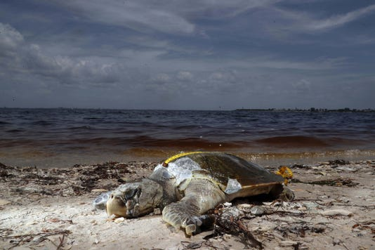 Usp News Red Tide A Usa Fl