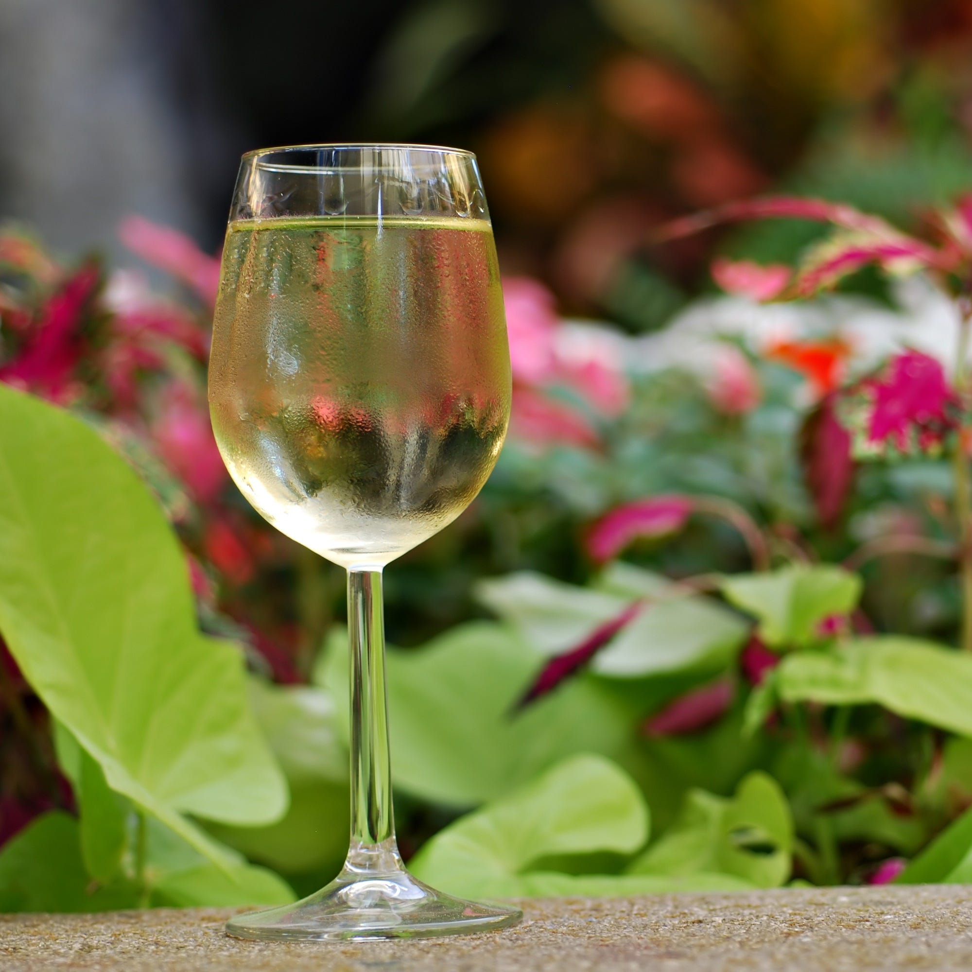 Sip 'n' Smell wine event at NC Arboretum Aug. 23