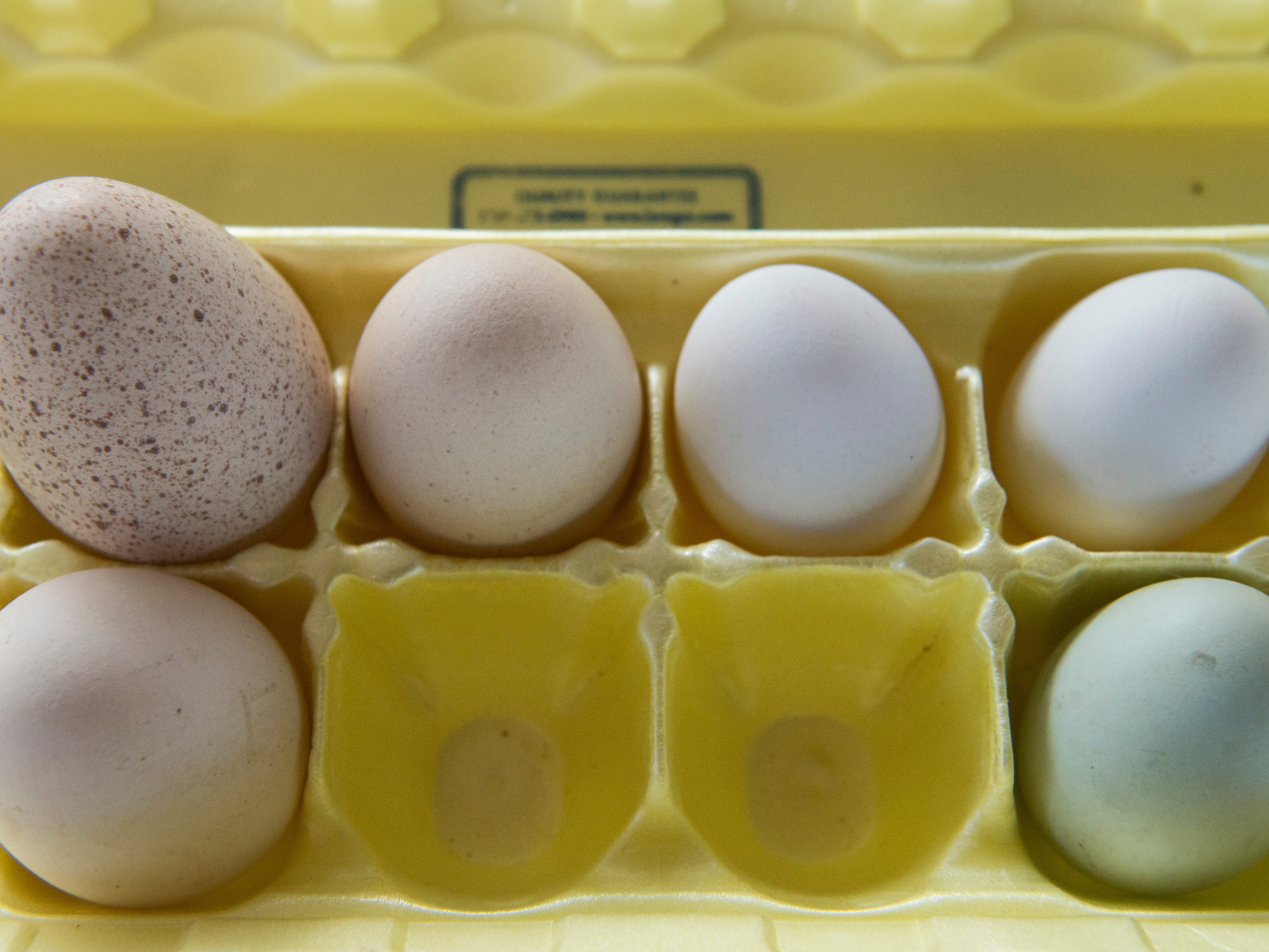 From left: A turkey egg, Bantam chicken eggs and Ameraucana chicken eggs are displayed for testing purposes during the Small Animal Showman of Showmen Contest at the Ross County Fair on August 9, 2018 in Chillicothe, Ohio.