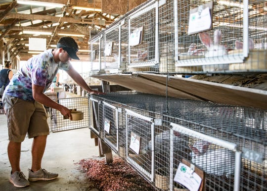 Unioto High School football player Kenton Richter feeds the rabbits that he will show at the 2018 Jr. Fair.