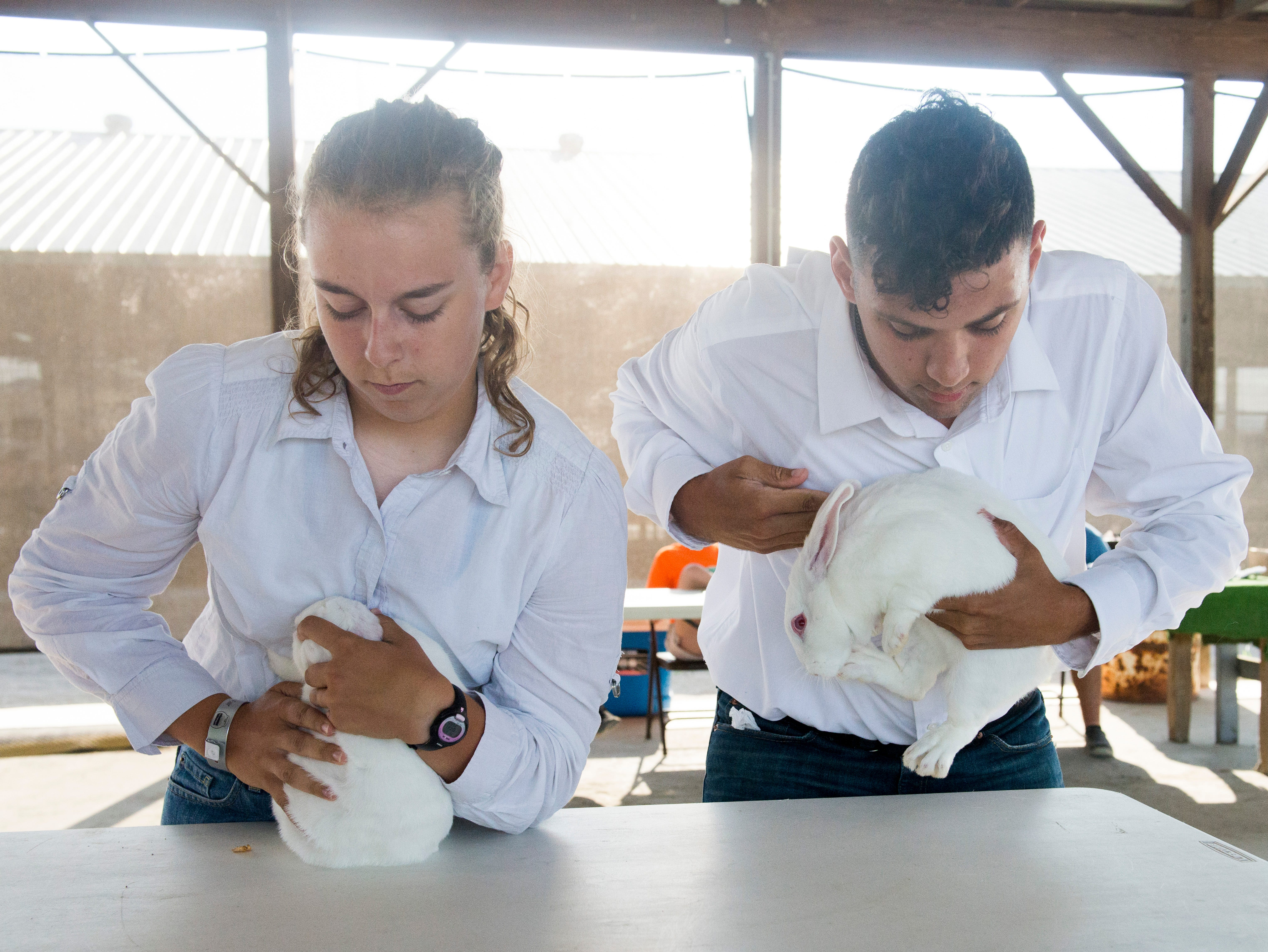 From left: Ruth Beery, 14, and Jaiden Rittinger, 17, compete in the Small Animal Showman of Showmen Contest at the Ross County Fair on August 9, 2018 in Chillicothe, Ohio. Beery was awarded the First Place in the Senior category of Showman of Showmen for Small Animals.