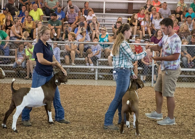 Part of Unioto student Kenton Richter's duties at the 2018 Jr. Fair is to help at various animal showings by making announcements and passing out ribbons to the winners and contestants.