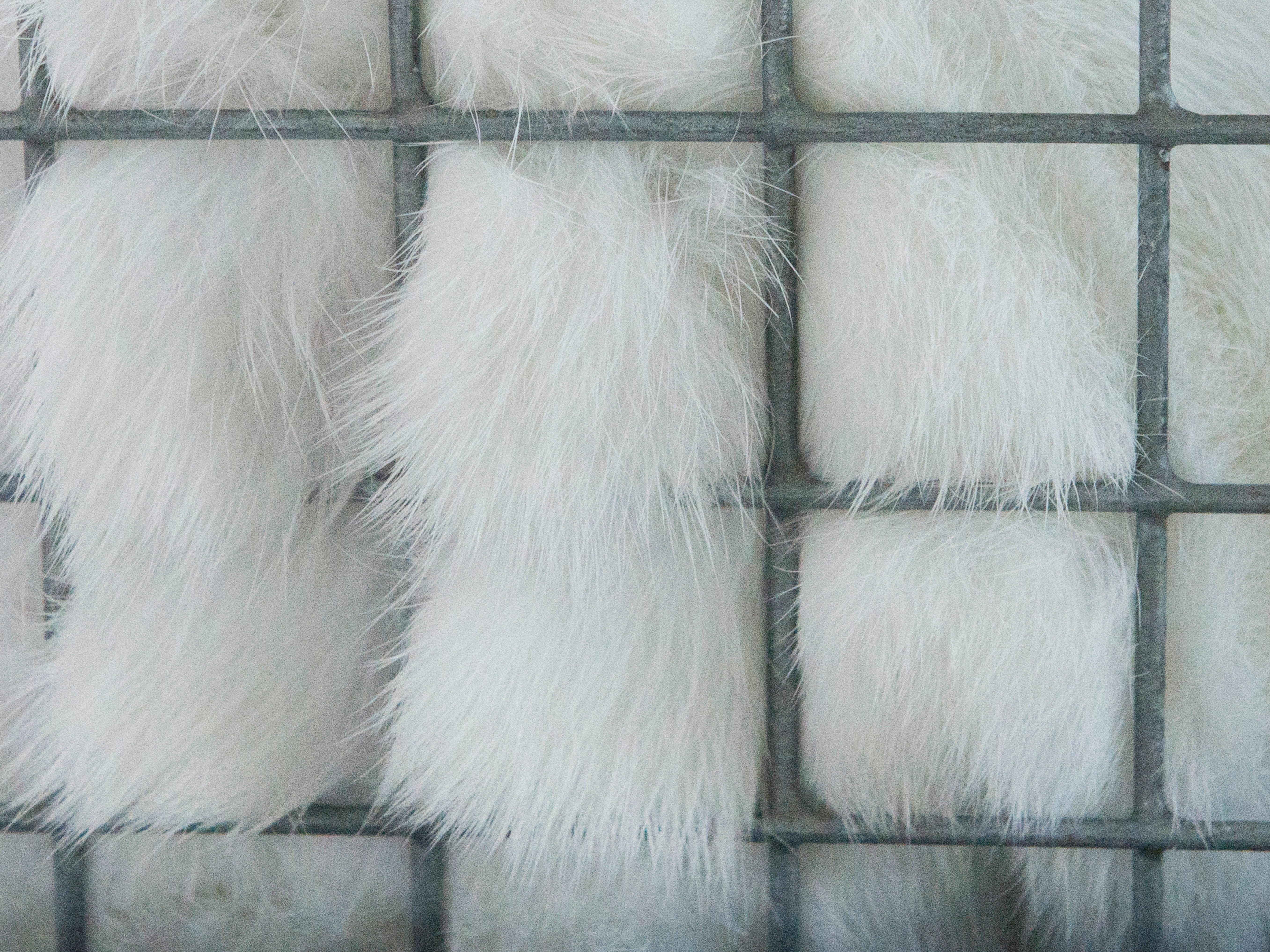 Rabbit fur protrudes from the enclosure during the Small Animal Showman of Showmen Contest at the Ross County Fair on August 9, 2018 in Chillicothe, Ohio.