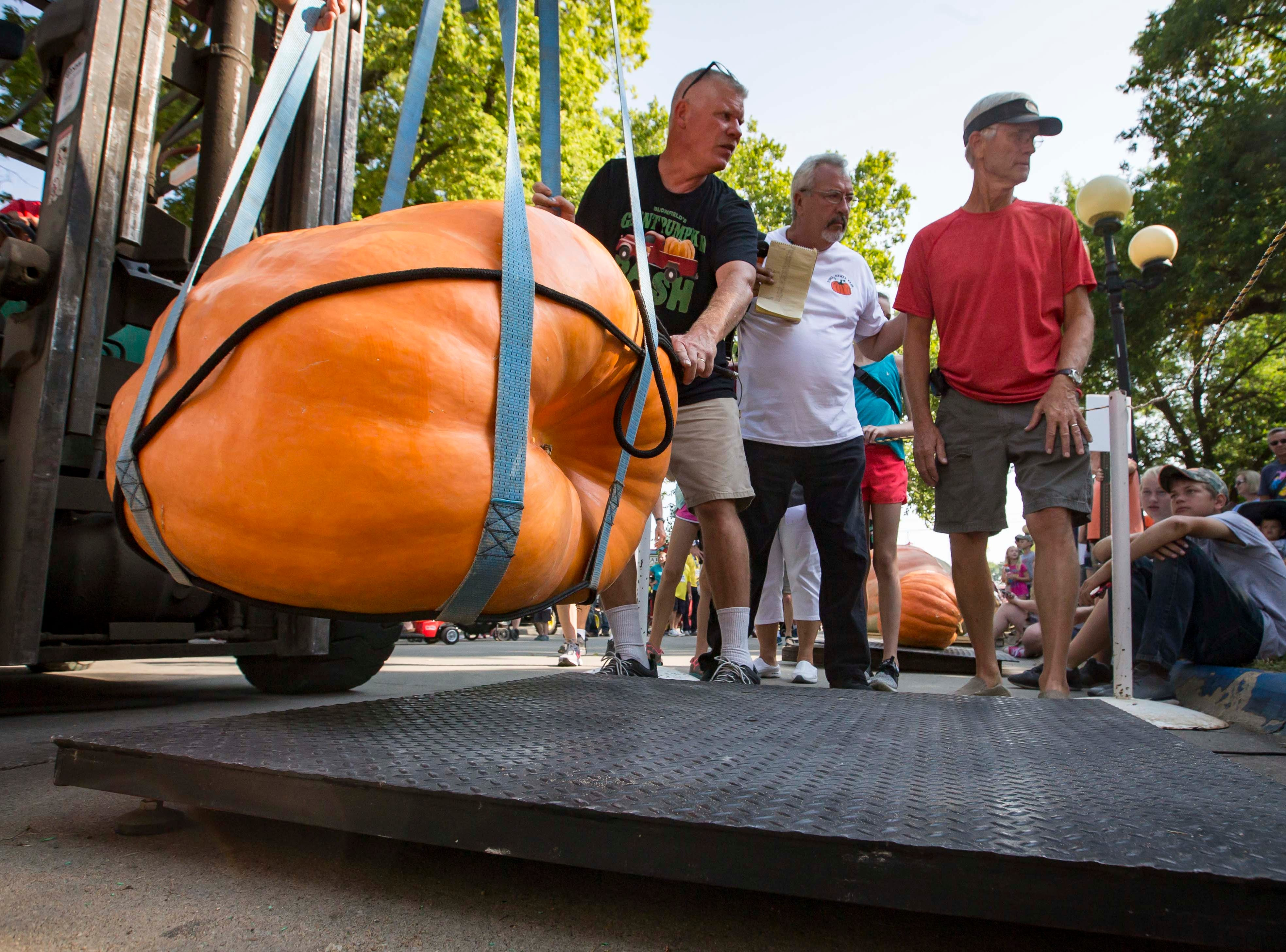 Contestants  wait for their pumpkin to be weighed during the Big Pumpkin contest at the Iowa State Fair Friday, Aug. 10, 2018, in Des Moines, Iowa.