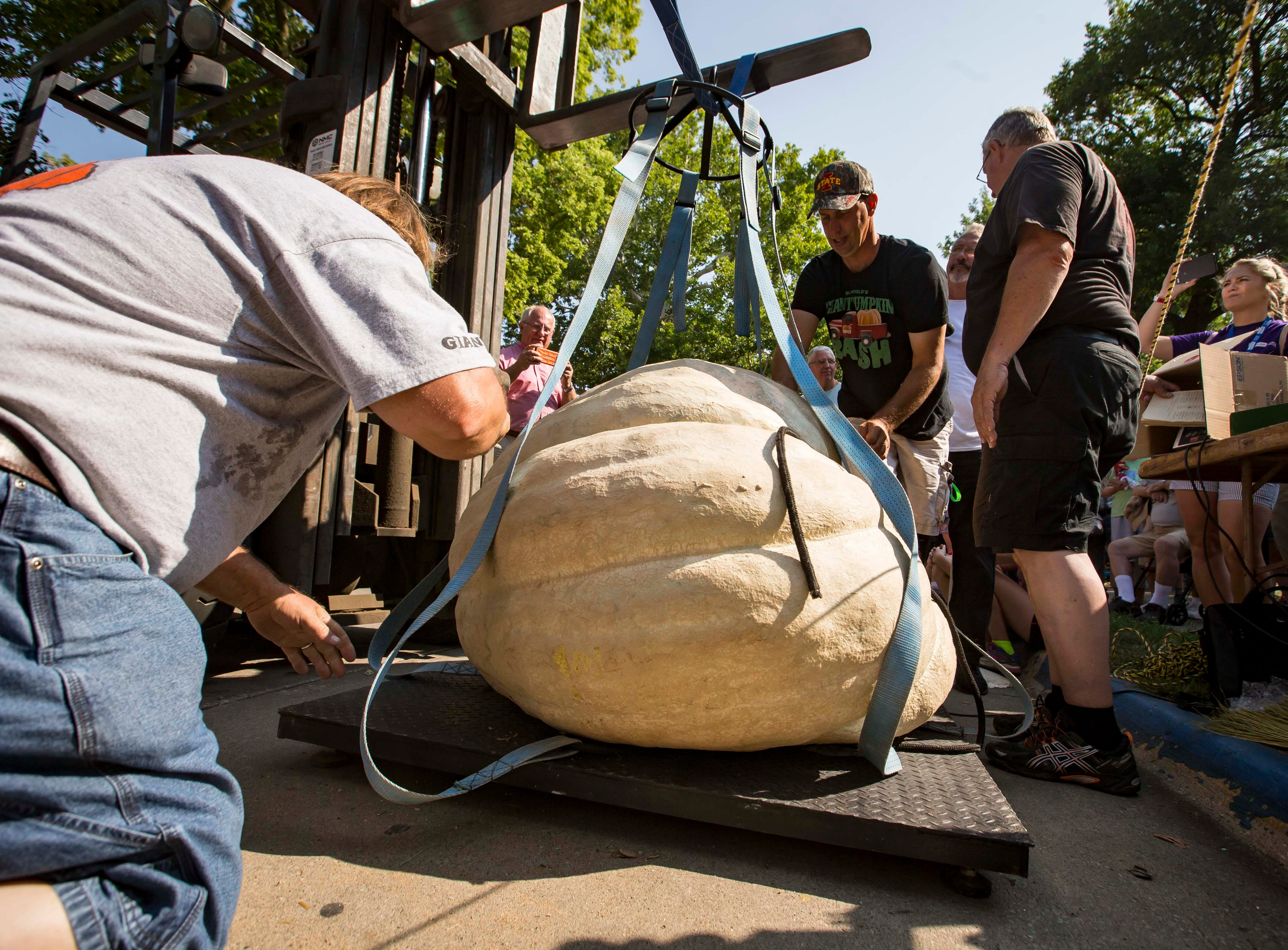 Dave Davis of Bloomfield has his pumpkin lifted to the scales to be weighed during the Big Pumpkin contest at the Iowa State Fair Friday, Aug. 10, 2018, in Des Moines, Iowa.