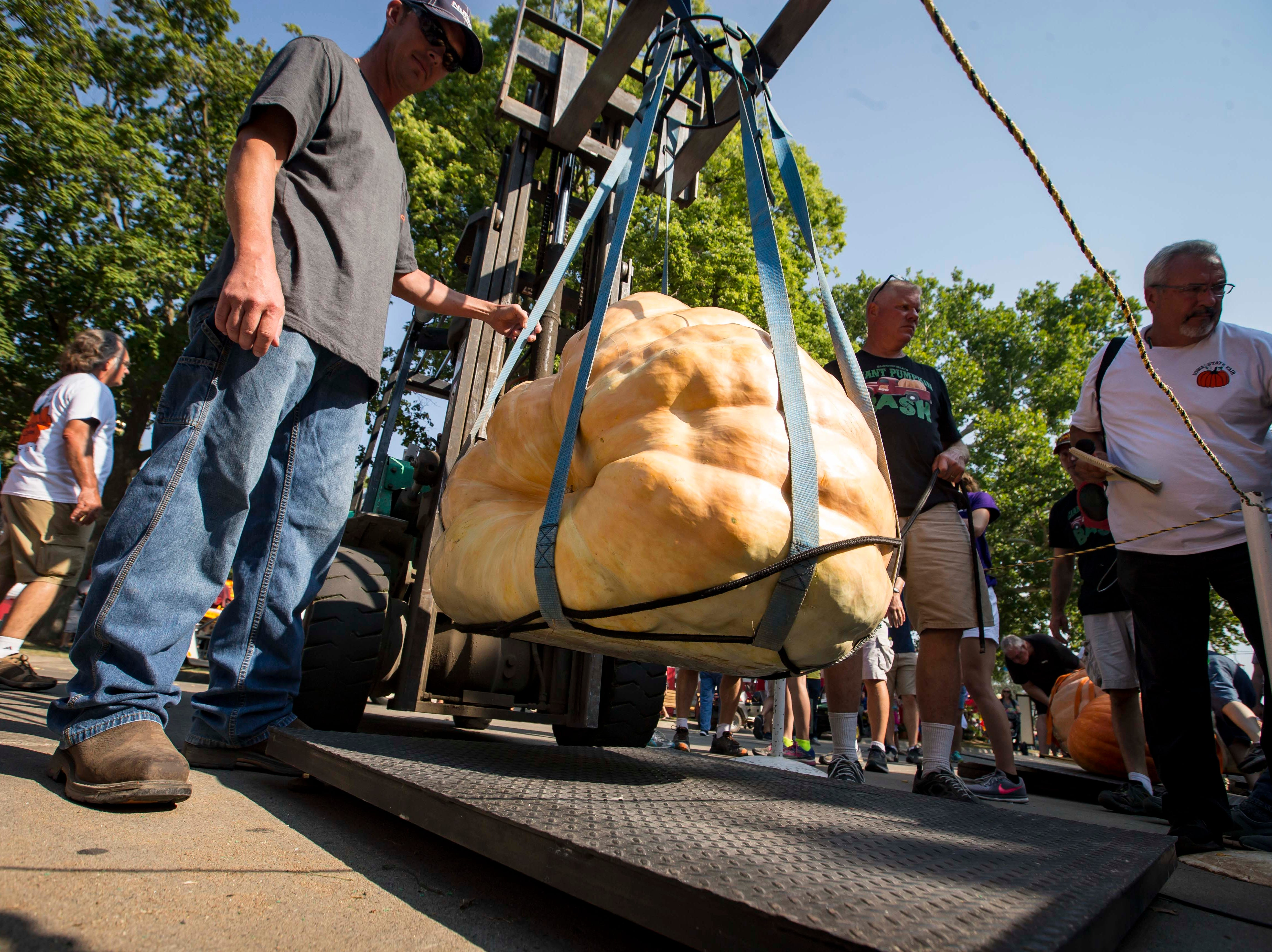 Scott Carter of Albia has his pumpkin weighed during the Big Pumpkin contest at the Iowa State Fair Friday, Aug. 10, 2018, in Des Moines, Iowa.