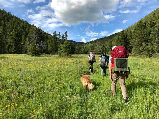 Hiking among wildflowers