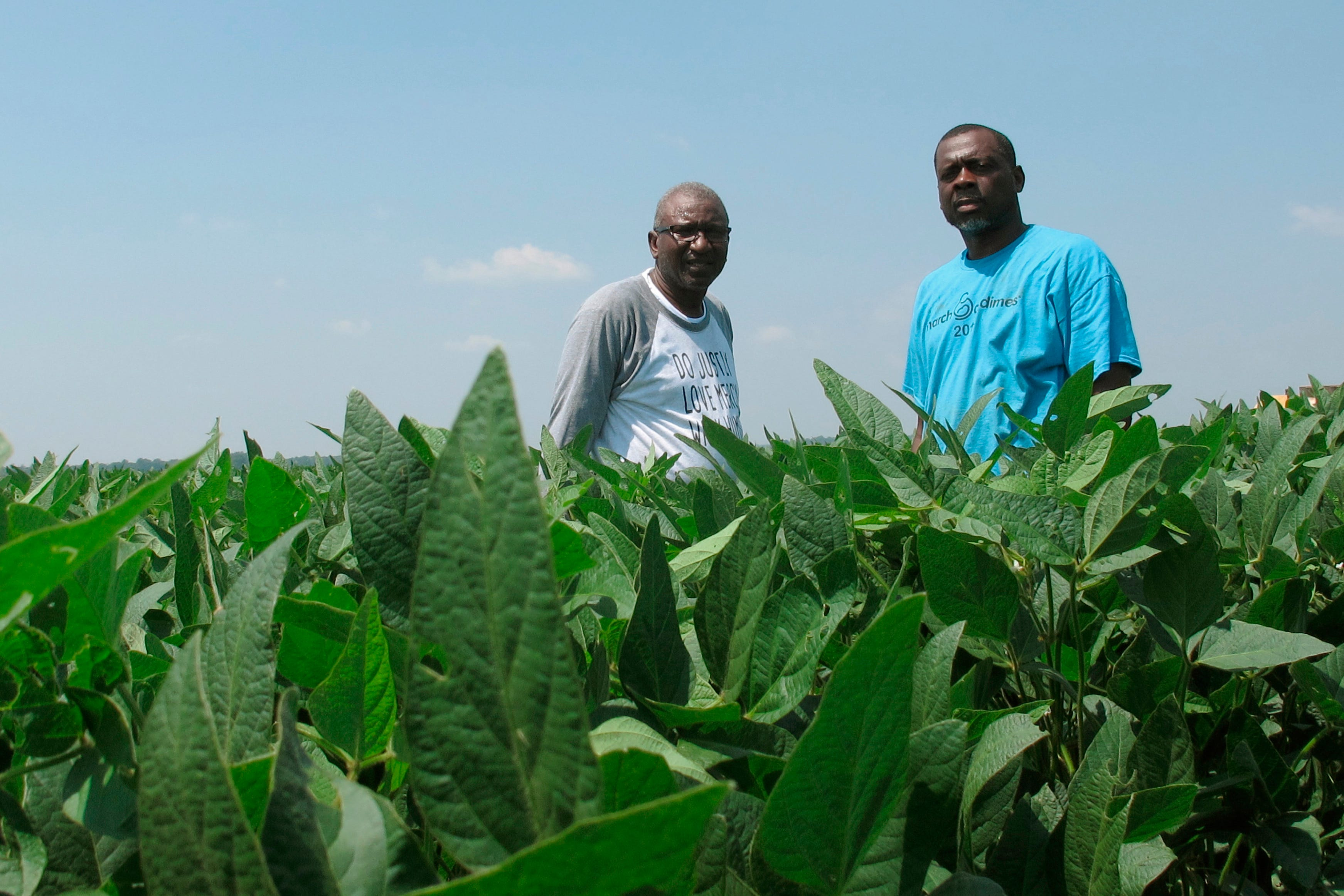 Black soybean farmers claim they were sold faulty seeds | Clarion Ledger