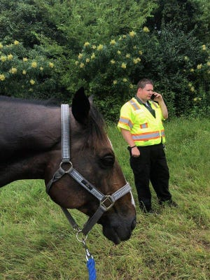 Troy the horse with an officer on Thursday, August 9, 2018.