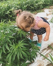 Dale and Gail Grossen's granddaughter, Laine Bechtolt, sniffs a hemp plant on the farm.