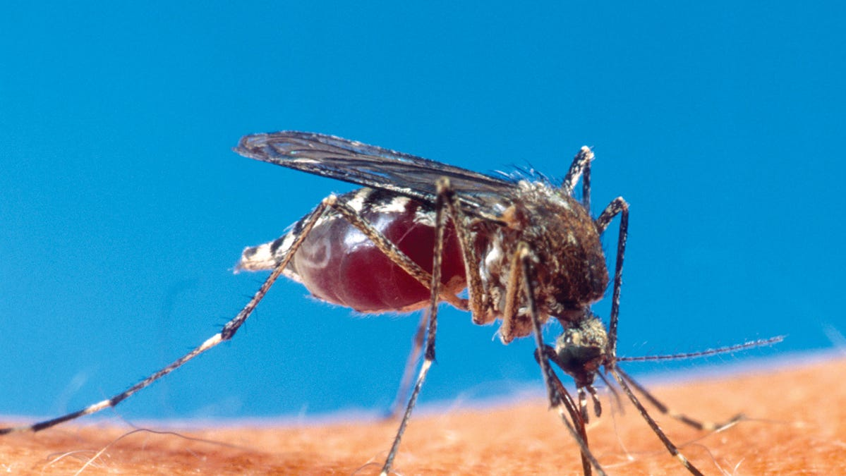 Officials just reported the first human case of West Nile Virus in Waukesha County this year