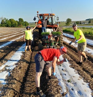 The first plots of hemp in Wisconsin in almost 70 years are planted on a dairy farm owned by Dale and Gail Grossen in Monroe, Wis.