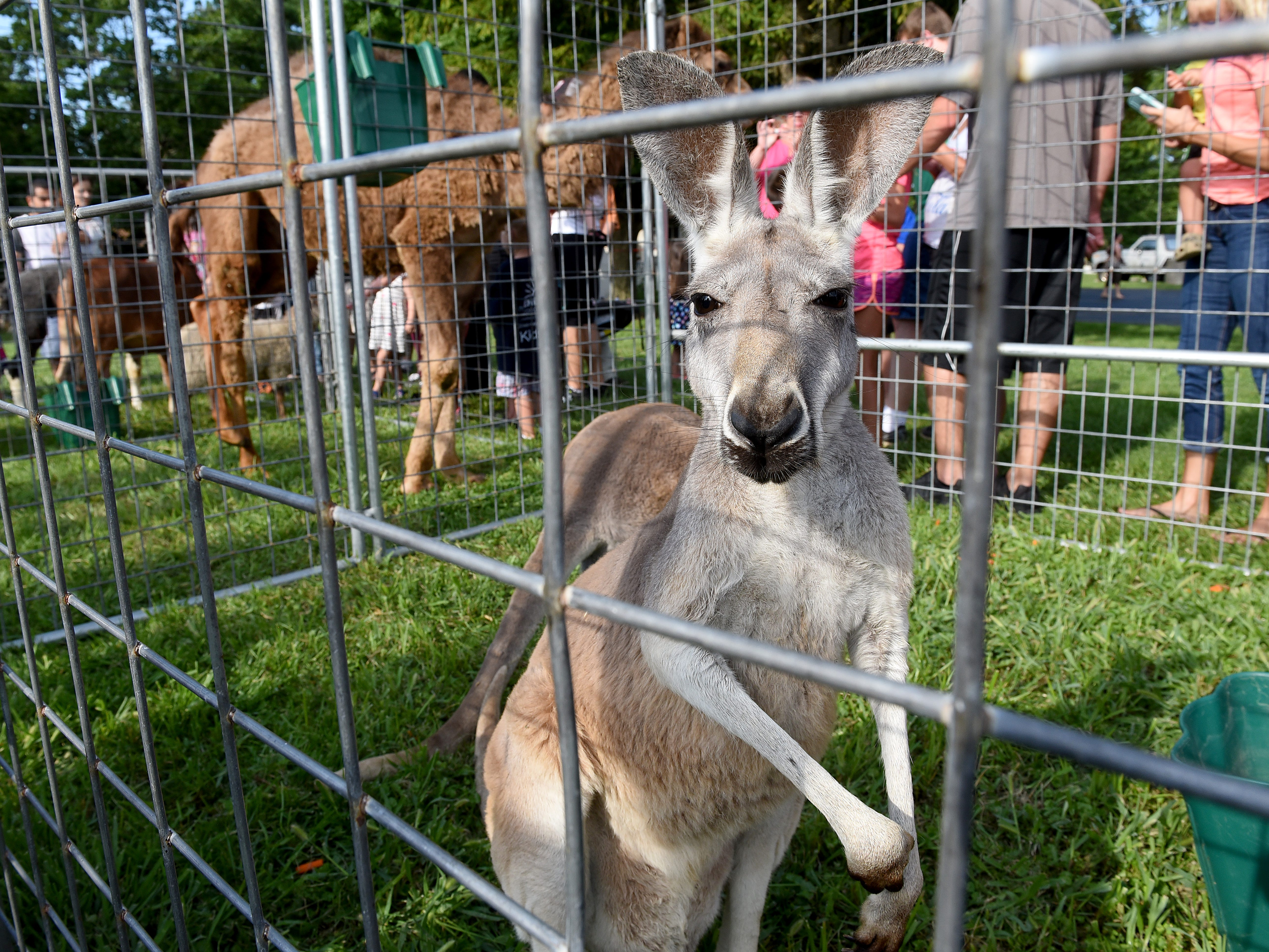 The Jungle Island Zoo out of Delphos visited the Pataskala Public Library on Thursday, Aug. 9, 2019.