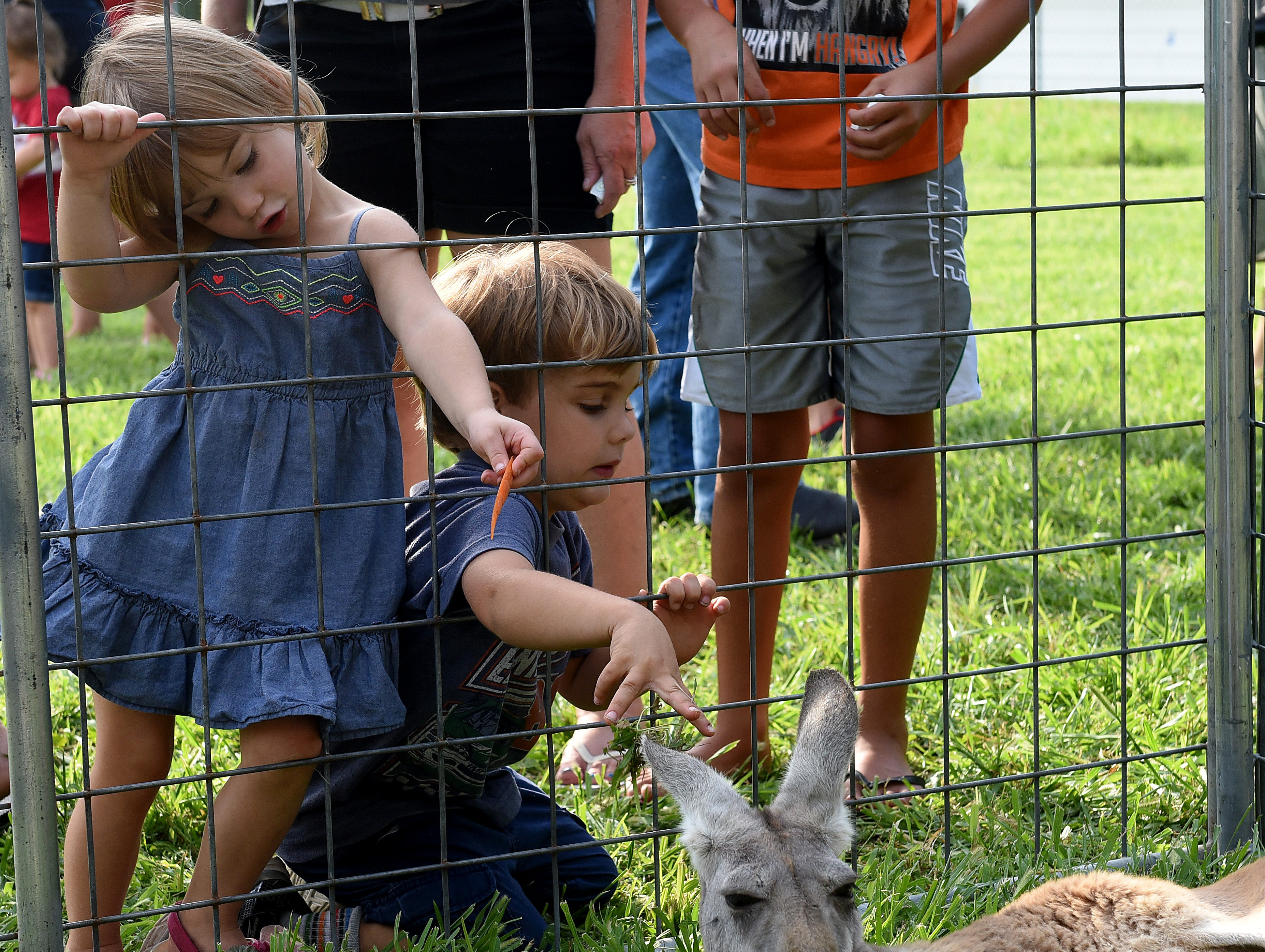 Siblings Claire, 3, and Harrison Ott, 4, feed and pet a kangaroo during a visit of the Jungle Island Zoo out of Delphos visited the Pataskala Public Library on Thursday, Aug. 9, 2018.