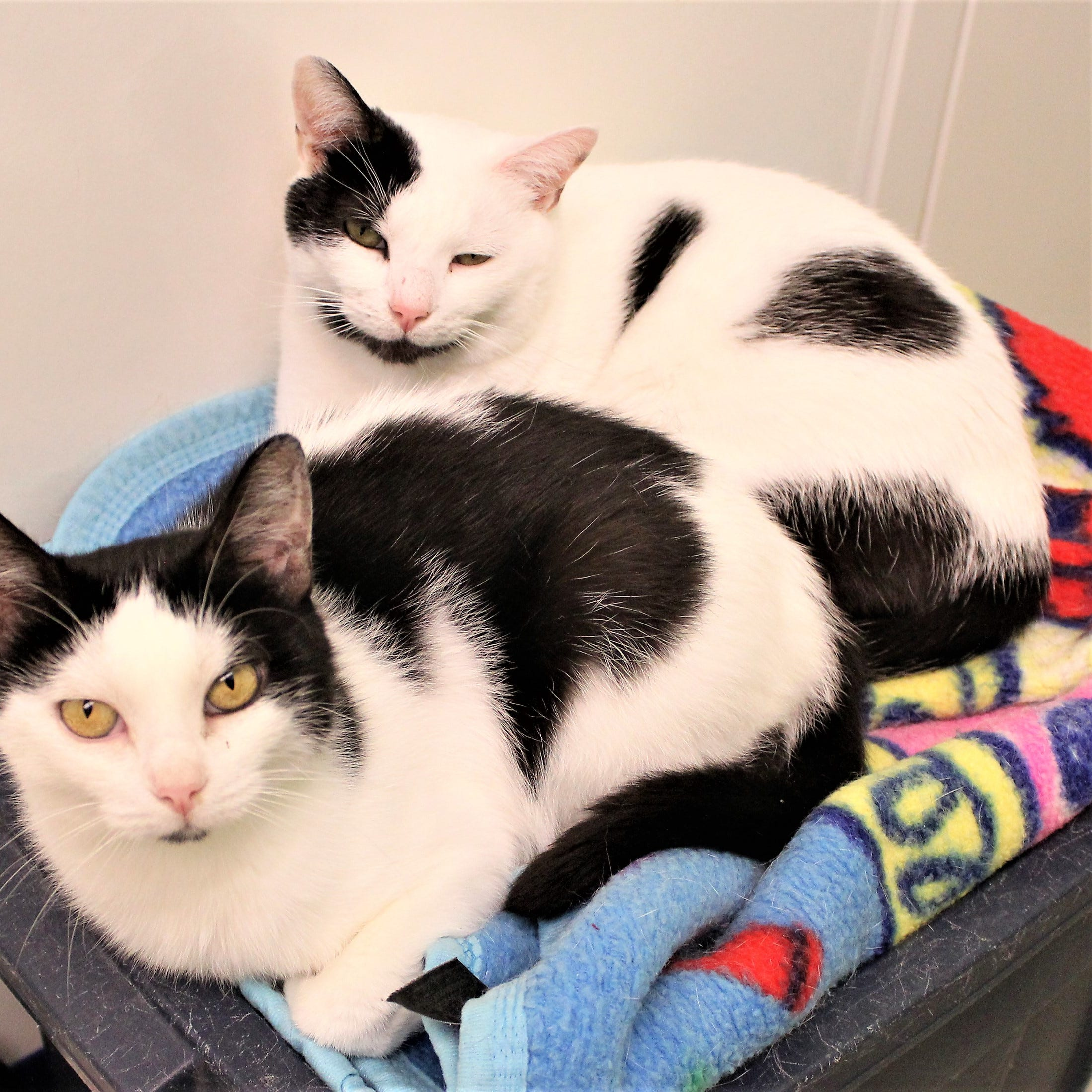 LCHS Pets of the Week: Loretta and Slogo